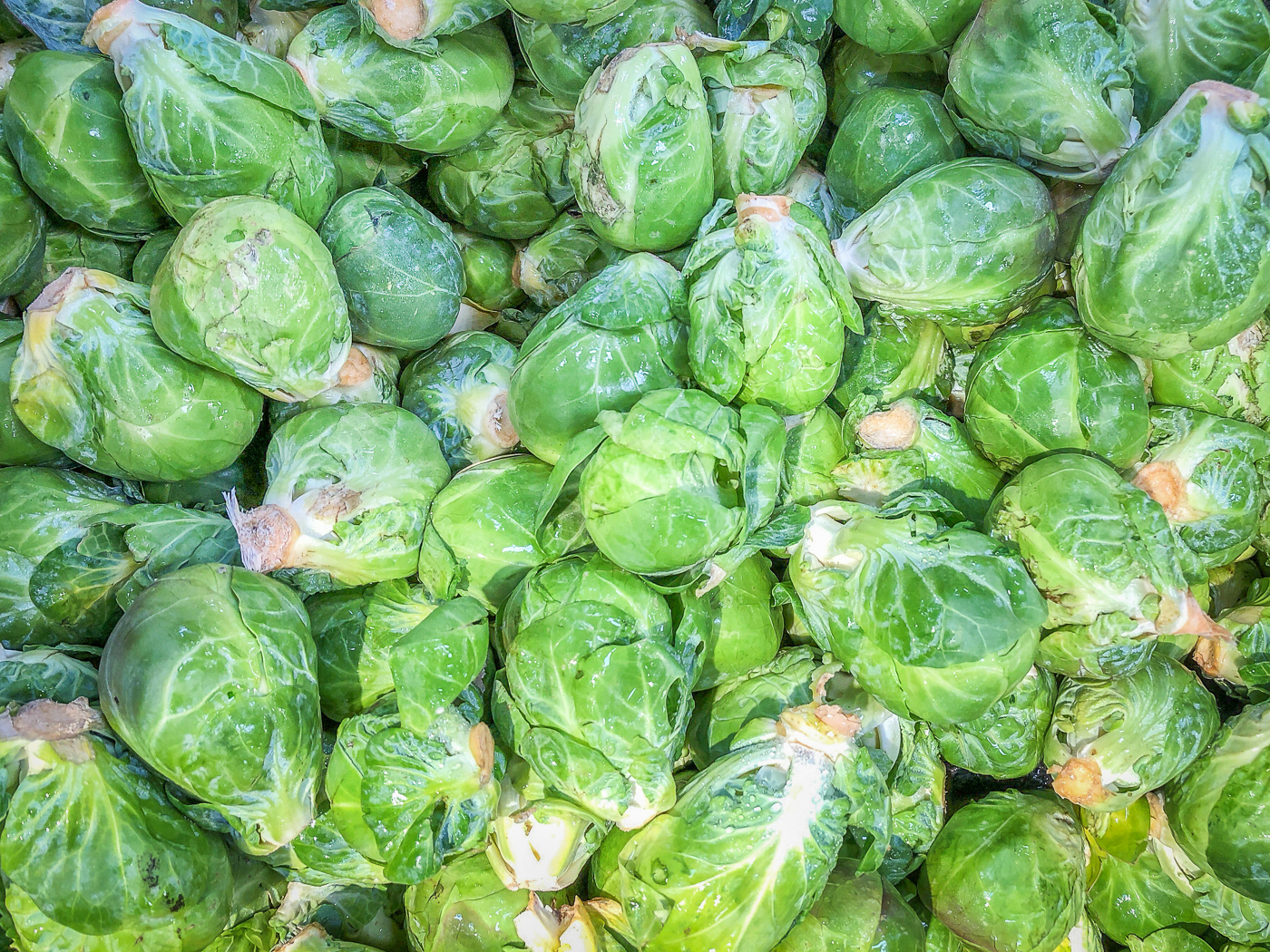 Close up photo of Brussels sprouts