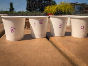 Numbered paper cups on a picnic table