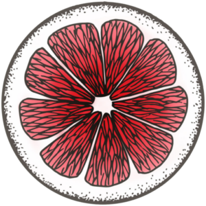 Pink and white line drawing of a grapefruit